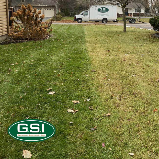late spring lawn application