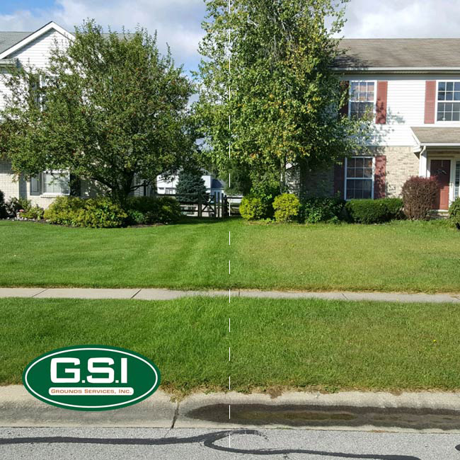 fall lawn application