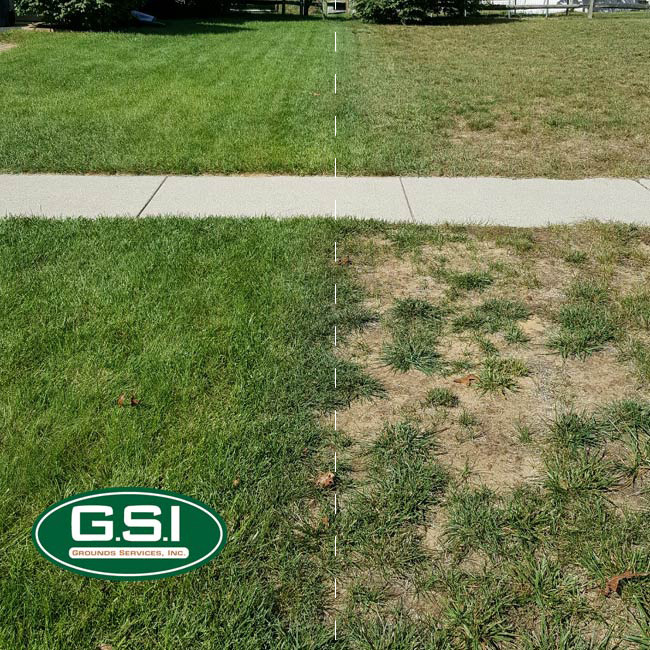 summer lawn application