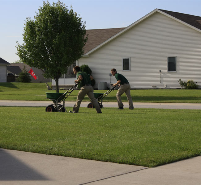 lawn fertilization and care